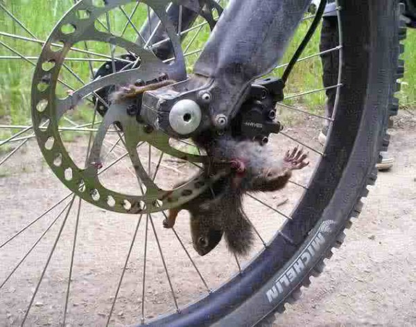 Someone does not brake for squirrels.
