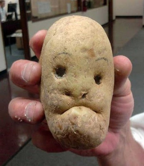 Contador. The Pinto potato.