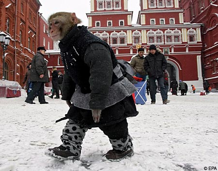Monkey in Moscow