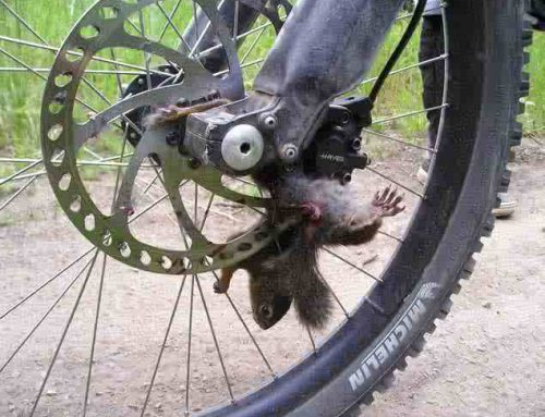 Squirrel loses battle with Mountain Bike.