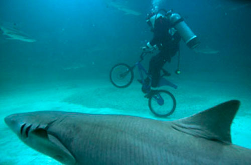 Riding with the shark. No, not Nibali.